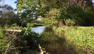 De Weerterbeek in Weert